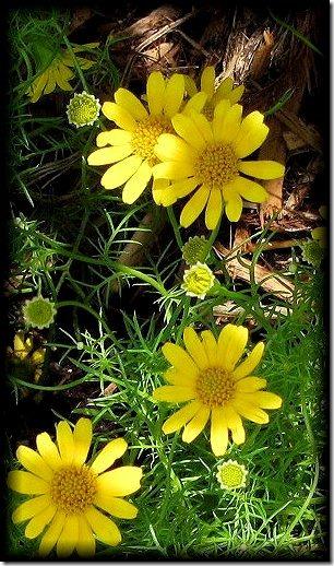 flower_zps18b51a4b[1]